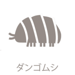 dangomushi